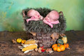 Autumn twins rustic nature image of two newborn twin babies in a wicker basket Stock Image