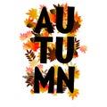 Autumn typographic. Fall leaf. Vector