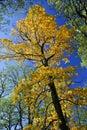 Autumn upadku park wielkie drzewo Obraz Royalty Free