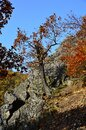 Autumn in the Valley of the River Bode in the Harz Mountains, Saxony - Anhalt Royalty Free Stock Photo