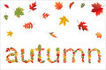 Autumn. Vector Royalty Free Stock Photos