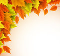Autumn vector background template. Fall season maple leaves elements Royalty Free Stock Photo