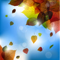Autumn vector leafs background- fall illustration with back light Royalty Free Stock Photo