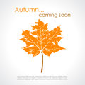 Autumn vector poster with maple leaf Royalty Free Stock Photos