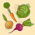 Autumn vegetables set of four different beets onions carrots cabbage Stock Photography