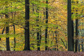 Autumn view of national park The Veluwe in Holland Royalty Free Stock Image