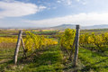 Autumn vineyard in colors and blue sky czech republic moravia europe Royalty Free Stock Image