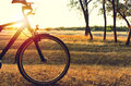 Autumn walk on a bicycle in the autumn forest. The sun shines through the bicycle. Royalty Free Stock Photo