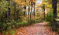 Autumn Walk Way Stock Photography