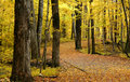Autumn Walk Way Royalty Free Stock Image