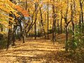 Autumn Walk in the Woods Royalty Free Stock Photo