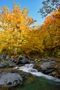 Autumn waterfall and creek woods with yellow trees foliage and r Royalty Free Stock Photo