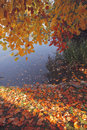 Autumn by watter Royalty Free Stock Photos