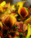 Autumn Wedding Floral Boquet Royalty Free Stock Photography