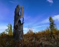 Autumn in Western Siberia Stock Photography