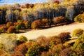 The autumn white birch on the meadow Royalty Free Stock Photo