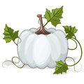 Autumn White Pumpkin Vegetable Royalty Free Stock Photo