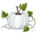 Autumn White Pumpkin Vegetable Royalty Free Stock Photo