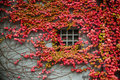 Autumn window background of red Stock Images