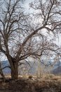 Autumn Winter Trees In Desert ...