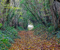 Autumn woodland footpath