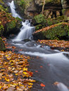 Autumn woodland stream Stock Photography