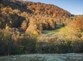 Autumn woodland in yorkshire an wooded hillside lit by warm morning sunlight Royalty Free Stock Images