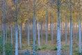 Otoño en bosque