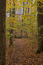 Autumn woods Royalty Free Stock Photos