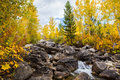 Autumn woods and creek Royalty Free Stock Photo