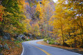 Autumn woods foliage with road Stock Photos