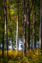 Autumn woods light is hitting the trunk of in the forest Royalty Free Stock Images