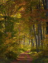 Autumn in the woods photo of a walking trail going through Stock Images