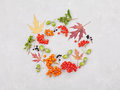 Autumn wreath from leaves, rowan, acorns, flowers and berry on gray background from above. Flat lay style. Royalty Free Stock Photo
