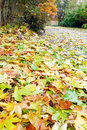 Autumn yellow abscissed leafs on park pathway Royalty Free Stock Images