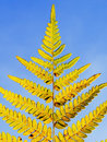 Autumn yellow fern Stock Photo
