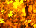 Autumn yellow leaves Royalty Free Stock Photos
