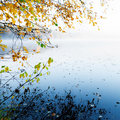 Autumn yellow leaves with reflection on still lake Royalty Free Stock Photography