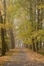 Autumnal alley Stock Photos