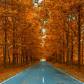 Autumnal alley autumn season background Stock Image