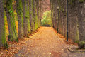 Autumnal alley in the park poland Royalty Free Stock Images