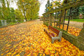 Autumnal alley in the park poland Royalty Free Stock Image