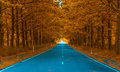 Autumnal alley perfect seasonal background Royalty Free Stock Photography