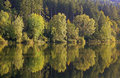Autumnal beech forest water reflection in the pond Stock Images