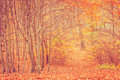 Autumnal bushes in forest. Royalty Free Stock Photo