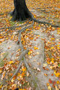 Autumnal Central Park Royalty Free Stock Photos