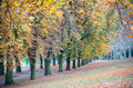Autumnal colors on the trees in a park an avenue of chestnuts Royalty Free Stock Photos