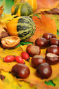 Autumnal decoration with colorful leaves chestnuts hips and gourd Stock Photo