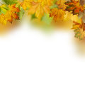 Autumnal foliage against white backgrounds Stock Photos
