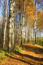 Autumnal forest Stock Photos